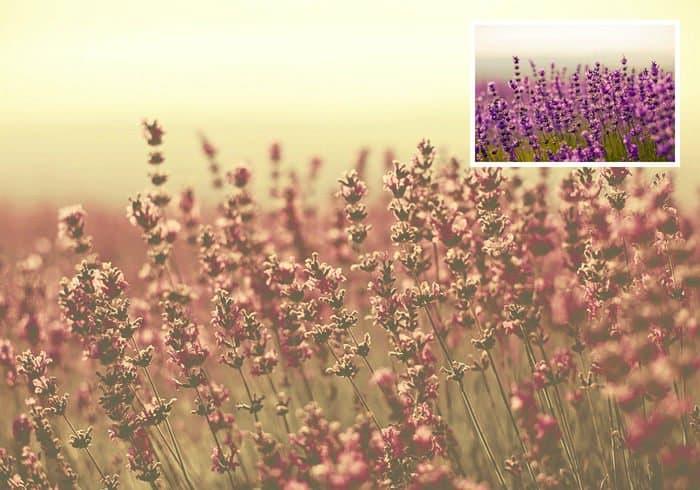 Desert Dust Filter Photoshop Actions
