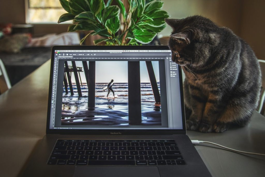 Photoshop on laptop with a cat